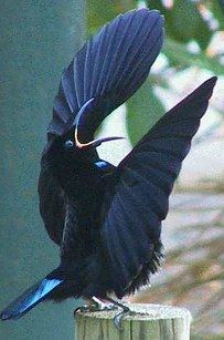 This master of darkness.   16 Birds You Won't Believe Actually Exist