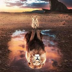 Lion King Poster made out of metal. Inspiring image of The Lion King. Lion King Animals, Lion King Art, Lion Art, The Lion King, Cute Cat Wallpaper, Lion Wallpaper, Animal Wallpaper, Rainbow Wallpaper, Disney Wallpaper