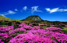 Île de Jeju, Corée du Sud