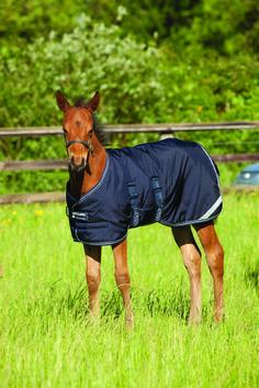7 Best Winter Rugs Horseware Ireland
