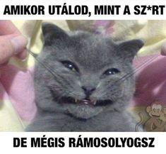 Animal Memes, Funny Animals, Funny Pins, South Park, Smiley, Puns, Funny Jokes, Haha, Laughter