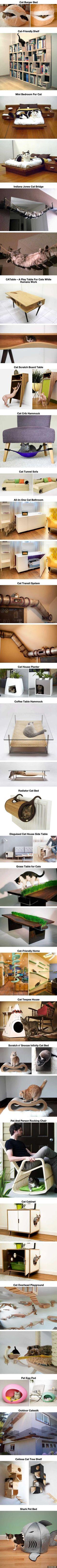 고양이에게 필요한 가구