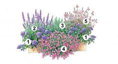 Blumenkasten Idee mit Vanilleblume, Balkonsalbei, Rosmarin, Zauberglöckchen und Prachtkerzen