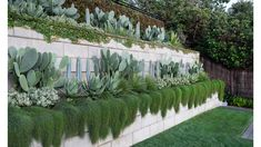 A Dramatic, Multi-Tiered Coastal Garden In Gordon's Bay Seaside Garden, Coastal Gardens, Tropical Garden, Coastal Landscaping, Backyard Landscaping, Cactus, Sloped Backyard, Tiered Garden, Most Beautiful Gardens
