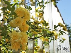 Step garden | Namba parks -NAMBA PARKS-