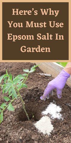 Herb Garden, Garden Art, Garden Plants, Growing Herbs, Growing Vegetables, Gardening For Beginners, Gardening Tips, Garden Ideas Budget Backyard, Flowers For You