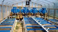 Great Water Tank Fish Aquaponics System Design