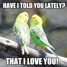 Looking for I love You memes or simply a cute romantic memes for your love mate? Introducing our hand picked collection of the best love memes. Cute Memes For Her, Sweet Love Memes, I Love You Funny, Love Memes Funny, I Love You Mom, Told You So, Just For You, My Love, Funny Humor