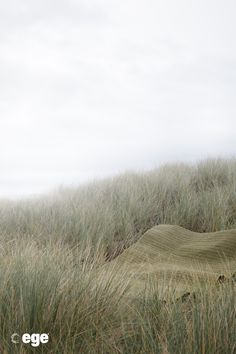 West Coast, Grass, Country Roads, Waves, Carpets, Photo And Video, Landscape, Offices, Danish