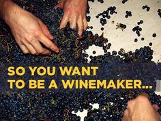 Meet a group of people who take their love of wine to the highest level. They make their own!