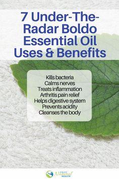 7 Under-The-Radar Benefits of Boldo Essential Oil - Enjoy Natural Health