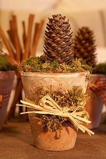 potted pinecone...