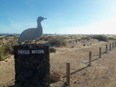 Fuerteventura Corralejo, se ami la natura ;)