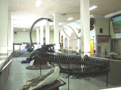 Discover the Past at the Museum of Geology, South Dakota School of Mines & Technology, Rapid City, SD.  Experience fascinating mounted skeletons of dinosaurs, marine reptiles, mammals and more.  Admission is Free.