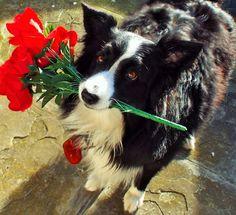 """I Love you....be my Valentine..."""