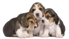 Sweet Puppy Pictures: Pics That Capture Pups At Their Cutest