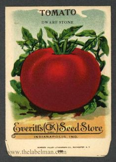 EVERITT'S SEED STORE,  Tomato 100, Vintage Seed Packet