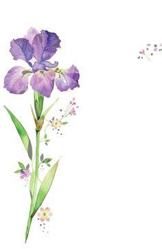 Lynn Horrabin - easter iris.jpg