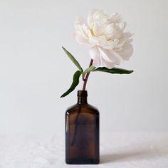 Queixo minhas rosas. Mas que bobagem as rosas não falam. Simplesmente as rosas exalam o perfume que roubam de ti. #cartola