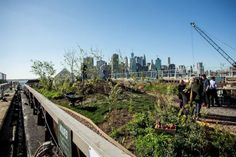 Swale, a floating garden, gives New York children the opportunity to learn about gardening through hands-on experiences. Brooklyn Bridge Park, Brooklyn Heights, Floating Garden, Parks Department, Places In New York, City Folk, Black Eyed Susan, Public Garden, Edible Plants