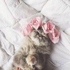So cute I love cats I Love Cats, Crazy Cats, Cute Cats, Funny Cats, Animals And Pets, Baby Animals, Funny Animals, Cute Animals, Cute Creatures