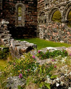 Iona nunnery with flowers - Isle of Iona, Scotland