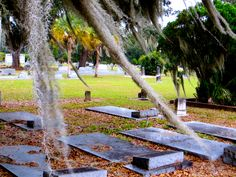 graves and Spanish moss (Fort Meade, FL) Fort Meade, Spanish Moss, Graveyards, City, Nature, Beautiful, Naturaleza, Cities, Nature Illustration