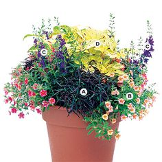 Mix plants that have attractive flowers with plants grown for their foliage and youll have an extra-appealing container. Here, purple summer snapdragon and golden coleus will look great all summer. This planting grows best in sun or part shade. A. Alternanthera Red Thread--2 B. Million bells (Calibrachoa Million Bells Terra Cotta)--3 C. Summer snapdragon (Angelonia AngelMist Deep Plum)--2 D. Coleus (Solenostemon Blond Bombshell)--1
