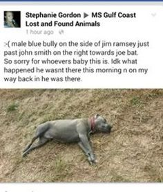 Our Babies are being snatched and are used as bait for dog fights! We, the undersigned, demand immediate action for the animals in George County! Their lives de...