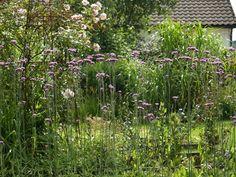 2017-08-11 Verbena bonariensis in the kitchen garden