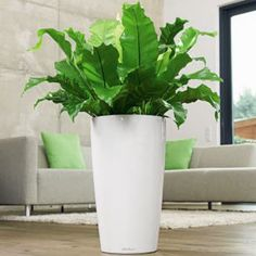 RONDO with irrigation system: less frequent watering and better plant growth! Contemporary Planters, Modern Planters, Outdoor Planters, Planter Liners, Planter Boxes, Potted Plants, Indoor Plants, Self Watering Planter, Watering Plants