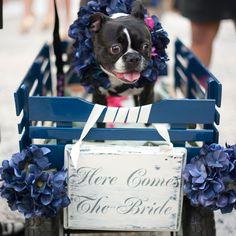 Is zij de bruid of is het een aankondiging?