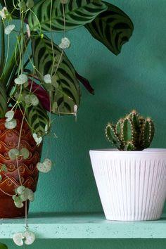 MY ATTIC voor vtwonen / plant shelfie / shelfie / urban jungle / plants / planten / groen    Fotografie: Marij Hessel Plant Aesthetic, Shelfie, Natural Materials, Scandinavian Design, Cactus Plants, Indoor Plants, Planting Flowers, Greenery, Plant Leaves