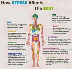 #Stress effects the entire #endocrineal system. 90% of modern #diseases are #psychosomatic in nature with stress as root cause be in Diabetes, High BP, Gastritis, etc..... —