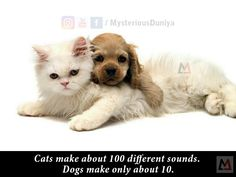Cats make about 100 different sounds, Dogs make only about  10.