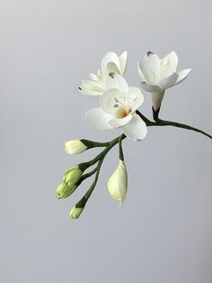 Freesia: Gallery collection of paper flower designs from Crafted to Bloom, Paper Floral Designs by Jessie Chui