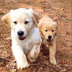 Bella and Duke ♥