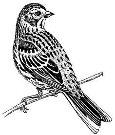 File:Vesper Sparrow (PSF).png