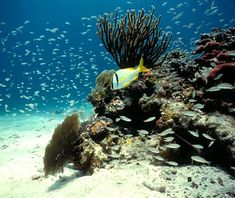 Biscayne National Park, FL is located at the north end of the Flordia Keys has 4 interrelated marine ecosystems.