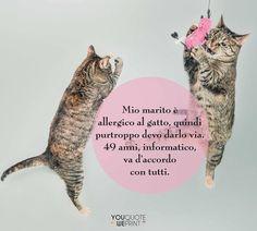 Il 17 febbraio si celebra la Festa nazionale del #gatto. Ecco la nostra raccolta di frasi sui gatti. #Donne, quante di voi farebbero a cambio con il proprio #marito per un tenero gattino?