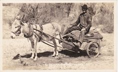 RP: Gold Prospector in Donkey Cart, Nevada , 30-40s