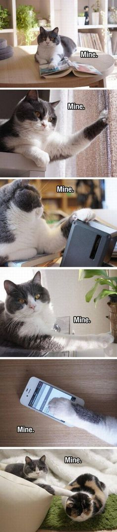 Funny pictures about It Belongs To Kitty. Oh, and cool pics about It Belongs To Kitty. Also, It Belongs To Kitty photos. Funny Animal Memes, Cute Funny Animals, Funny Cats, Cute Kittens, Cats And Kittens, I Love Cats, Crazy Cats, Gatos Cats, Photo Chat
