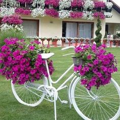 Amei a combinação das flores na bicicleta, com as da varanda! #loucaporfesta #loucasporfestas #loucaporfestas #decor #decoração #flores Imagem @umcafeduasamigas