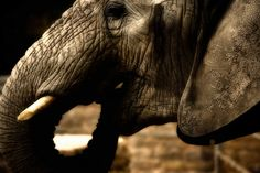 elefant far from home  by abgefahren2004