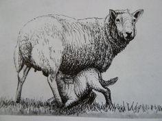 Výsledkom obraz pre perokresba zvířata