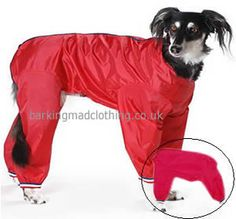 Dog Trouser Suits, perfect for keeping your dog dry and mud free http://www.barkingmadclothing.co.uk/dog_trouser_suit_red.html