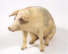Stuffed Tattooed Pigs