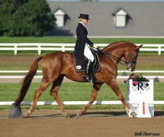 Favian *Ps* (Justiz *Ps* x Famosa by Insterruf) 1989 ATA Trakehner. Proven producer of amateur-friendly sport horses. Owned by Two Run Creek Trakehners.