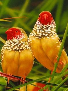 A pair of exotics Kinds Of Birds, All Birds, Love Birds, Pretty Birds, Beautiful Birds, Animals Beautiful, Beautiful Pictures, Animals Amazing, Pretty Animals