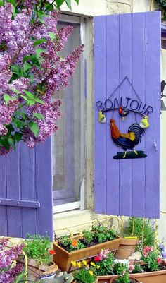 herbs growing in pots outside this great lavendar shuttered window....and the rooster, lol! How very Parisian it is....